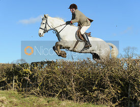 Tom Collie jumping a hedge near Knossington Spinney - The Cottesmore at Furze Hill.