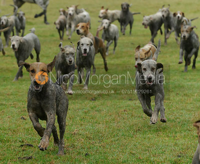The Cottesmore Hunt at The Kennels 14/9 photos