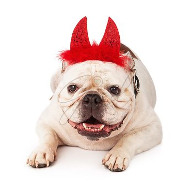 Bulldog wearing devil horns