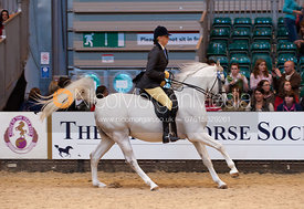 OAS PLASHAAL (Claire Doxey) - Purebred Arab of the Year Championship - HOYS 2011