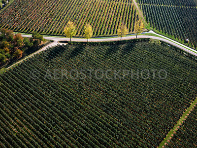 305341 | Lienden, fruit growing and trees in autumn colours in the Betuwe