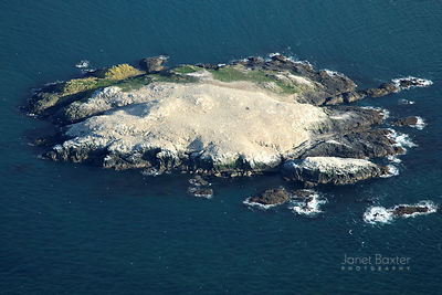 GRASSHOLM photos