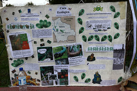 Poster promoting ecological coca production and informing about pests that attack coca plants ( Erythroxylum coca ) , La Paz , Bolivia