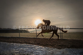 A racehorse on Newmarket gallops.