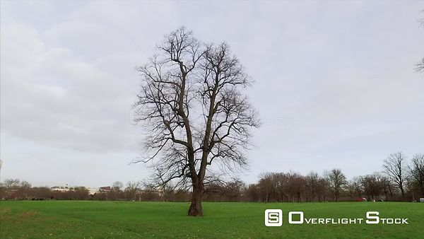 Drone Video of a Lone Tree in Autumn Hyde Park London England