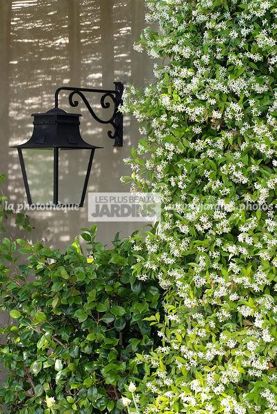 la phototh que les plus beaux jardins jasminuml. Black Bedroom Furniture Sets. Home Design Ideas