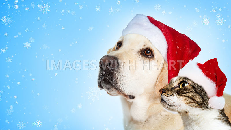 Christmas Dog and Cat Website Header