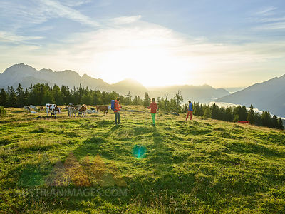 Austria, Tyrol, Mieming Plateau, hikers on alpine meadow with cows at sunrise