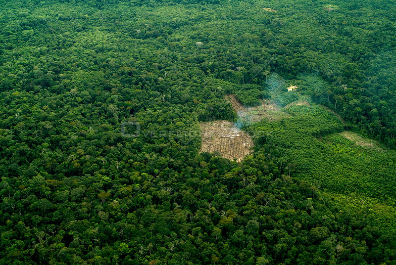 Aerial view of rainforest clearance for agriculture, small-scale deforestation slash and burn, Amazon rainforest, Peru