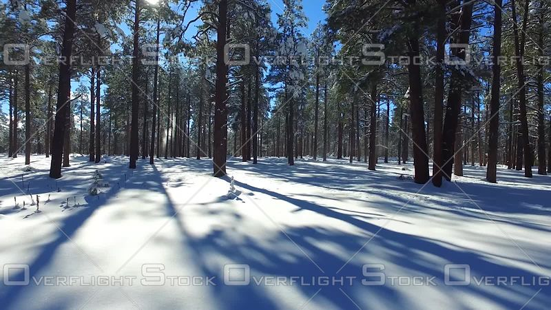 Snowy Pines Flagstaff Arizona