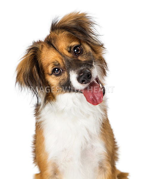 Cute Small Happy Dog Tilting Head Looking Forward