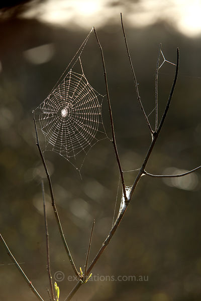Dew covered spiders web.