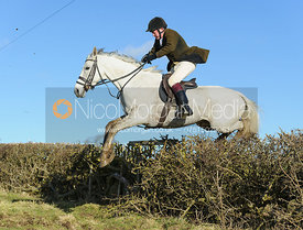 Andrew Collie jumping a hedge near Knossington Spinney - The Cottesmore at Furze Hill.