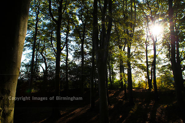 Sunlight streaming through trees at Frankley Beeches in Birmingham, England.
