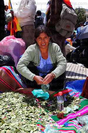Coca grower with bag of coca leaves ( Erythroxylum coca ) at an event promoting traditional uses of the coca leaf , La Paz , Bolivia