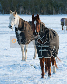 Horse in a snow-covered field