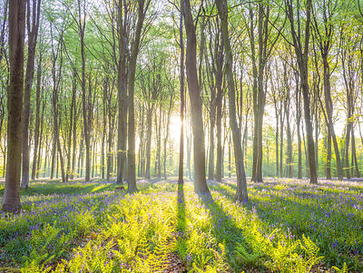 Sun rays through trees in forest, Hampshire, UK