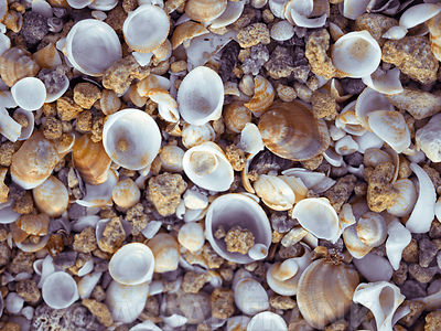 Sea Shells photos