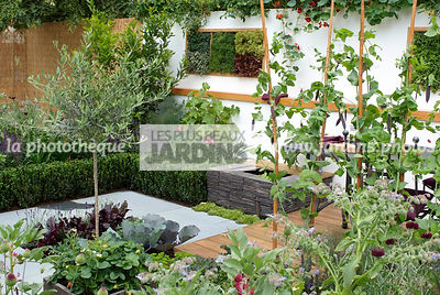 Allotment, Contemporary garden, garden designer, mangetout, Mini potager, Mini Vegetable garden, Olive tree, Small garden, Urban garden, Vegetable patch, Vegetable plot, Foliage wall, Green wall, Vegetation wall, Wall decoration