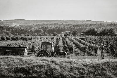 Vendanges en Borderies