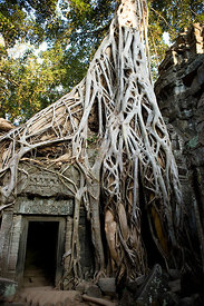 Cambodia - Ta Prohm temple, Siem Reap part of Angkor Wat