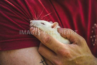white rat in hand