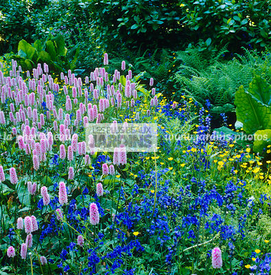 Blue, Bluebell, Border with flowers, Creeping plant, Fern, Perennial, Pink, Plants, Shadow, Shadow garden, Square