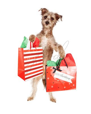 Terrier Dog Carrying Christmas Presents