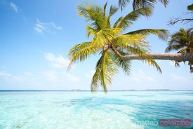 Palm tree leaning over water Maldives
