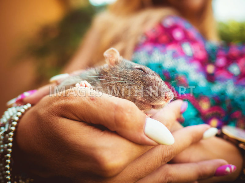 Rat in woman's hands