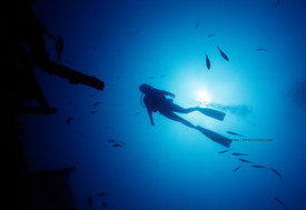 FL, Key West, wreck of the Cayman, underwater, woman diver