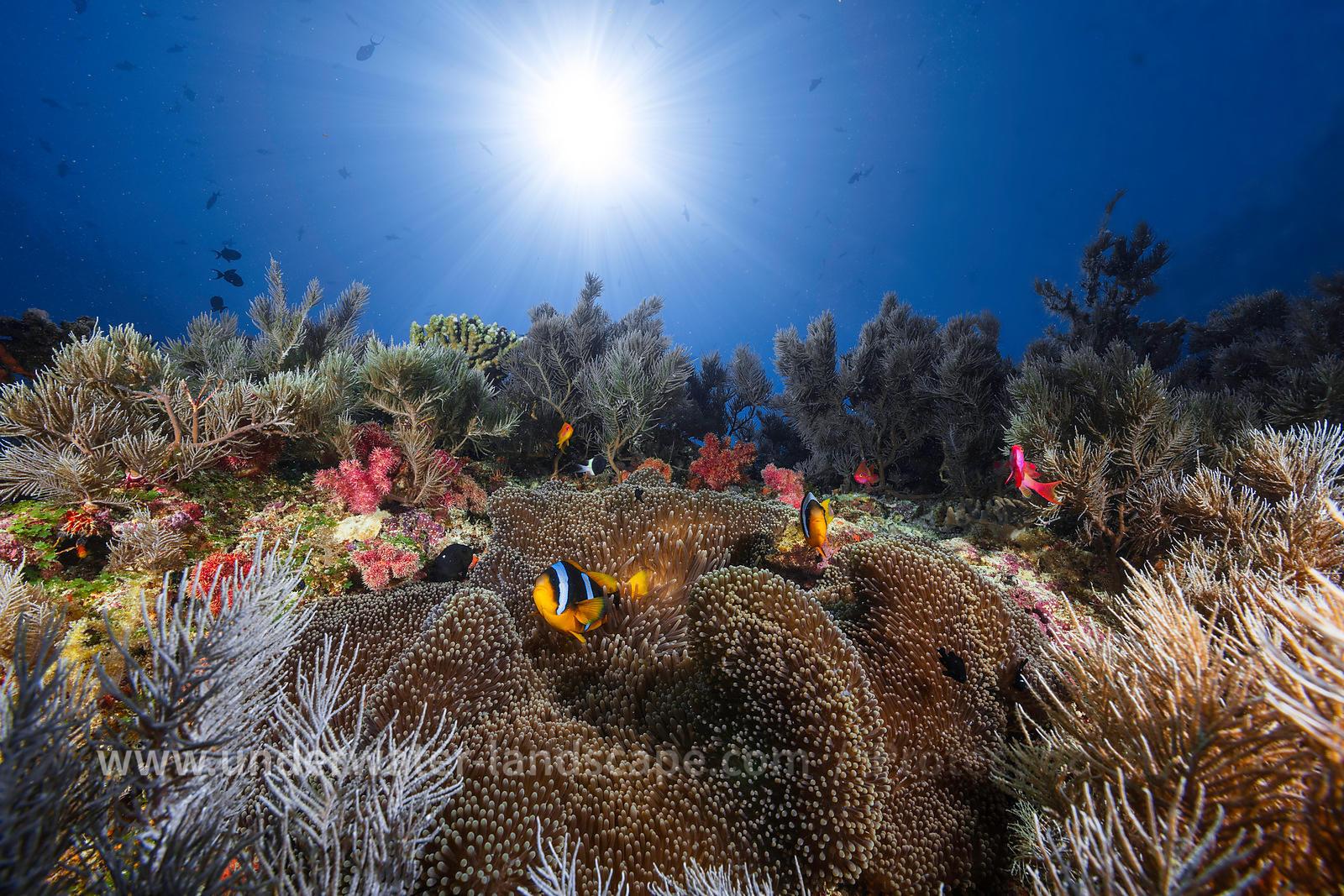 Photo sous marine photographe sous marin une an mone for Boutique dans un jardin en ligne