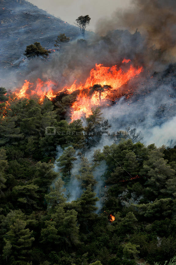 Mediterranean pines (Pinus halepensis) in forest fire, taken from the Patra Korinth Highway, Mount Klokos, Peloponese, Greece. 9th July 2007.