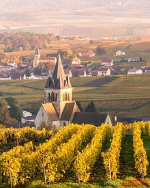 Sunset over the vineyards of Ville Dommange, Champagne, France