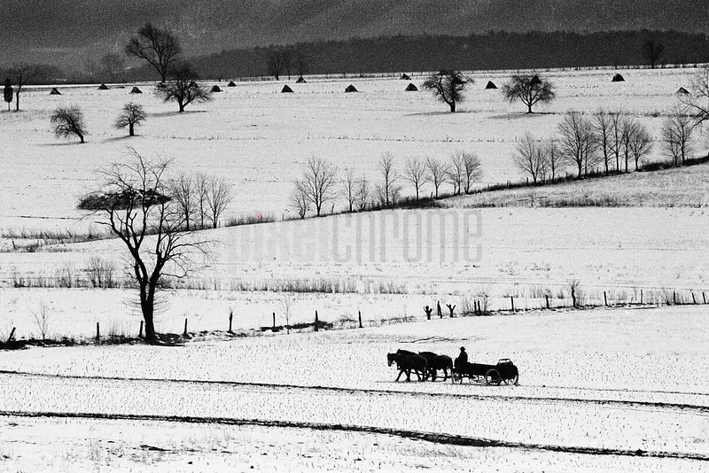 Amish Farmer Driving Manure Spreader in Snowy Landscape