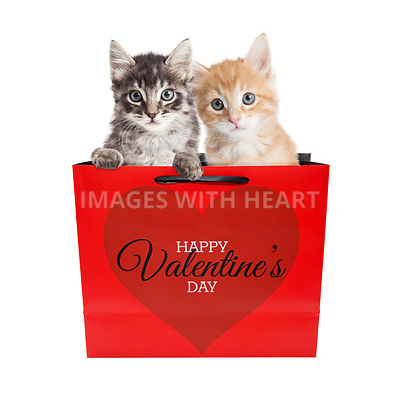 Cute Kittens in Valentines Day Bag