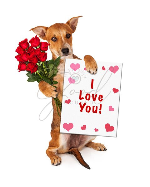Love You Puppy With Roses
