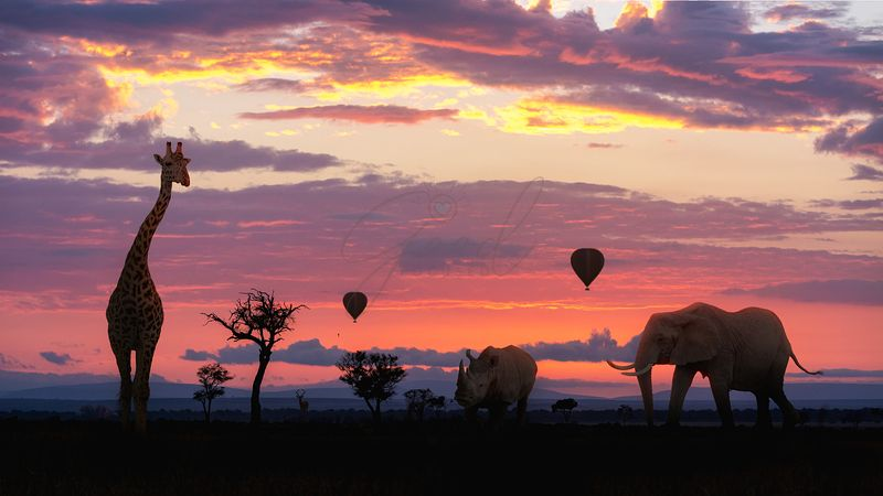 African Safari Colorful Sunrise With Animals