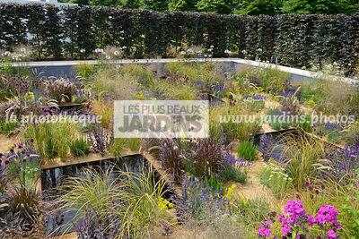 la phototh que les plus beaux jardins jardin champ tre allium sphaerocephalon drumstick. Black Bedroom Furniture Sets. Home Design Ideas