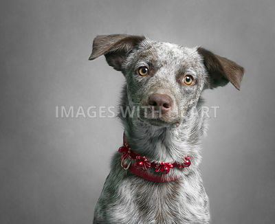 Head shot of beautiful mixed breed dog looking at camera