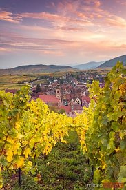 Sunset over the vineyards in autumn, Riquewihr, Alsace, France