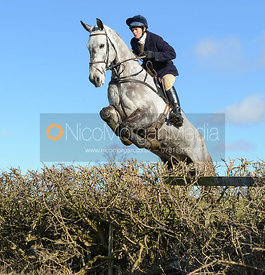 Tiny Clapham jumping a hedge near Knossington Spinney - The Cottesmore at Furze Hill.