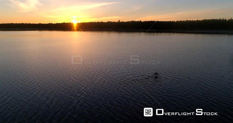 Man diving in the sea, aerial view around a male swimming outside the coast of Hanko, on a sunny summer evening dusk, Hango, Uusimaa, Finland