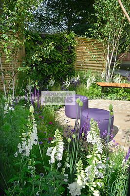 Jardinet, Poufs (Mary Goulding), Massif fleuri : Digitalis 'Camelot White' (Digitale), Allium sphaerocephalon (Ail à tête ronde), Paysagistes : Claire Moreno, Amy Robertson, Wendy von Buren, HCFS, Angleterre