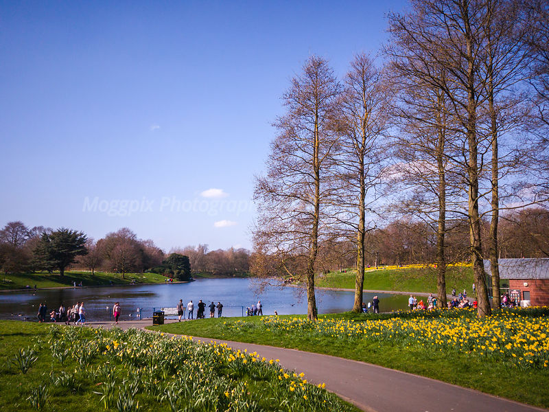 Image Gallery: Sefton Park photos