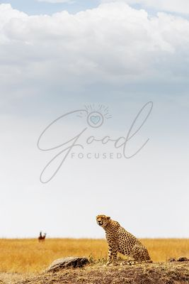 Cheetah in Africa - Vertical with Copy Space