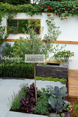 Allotment, garden designer, Mini potager, Mini Vegetable garden, Olive tree, Salad, Small garden, Urban garden, Vegetable patch, Vegetable plot,