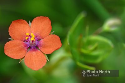 Orange and Red Wild Flowers Gallery photos