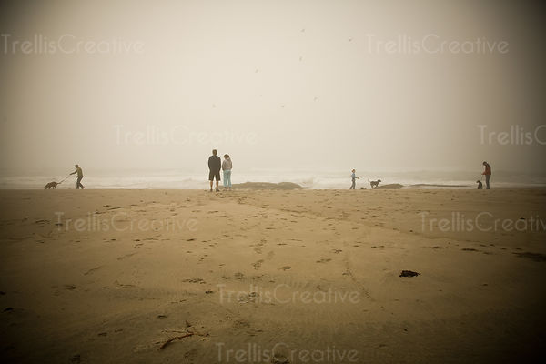 Young couples walking dogs on a sandy beach
