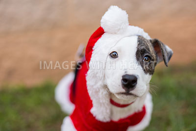 Puppy in santa hat outdoors